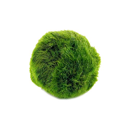 POPETPOP Marimo Moss Balls Piante acquatiche Paesaggi Verdi per Acquario Decorazione Acquario 3cm
