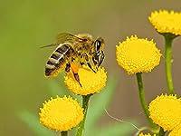 ジグソーパズル 1000 -木製パズル 大人 向け(6歳以上が適しています)   蜂と花