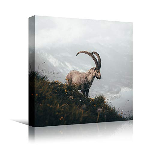bestdeal depot Goat III Animals Expressive Farmhouse/Country Goat Living Room Multicolor Photography Wall Art Prints for Living Room,Bedroom Ready to Hang - 24x24 inches