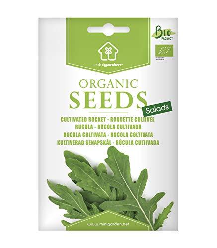 Rucola, zertifizierte biologische Samen von Minigarden, enthält zwischen 2000 und 2750 Samen