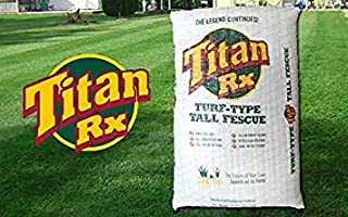 titan rx turf type tall fescue