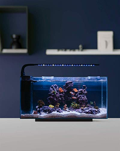 JBJ Rimless Desktop 10 Gallon Flat Panel Peninsula with 9W Lyra LED