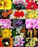 FLORACIÓN KALANCHOE Mezcla rara planta de flor de cactus exóticos semilla suculenta 100 semillas