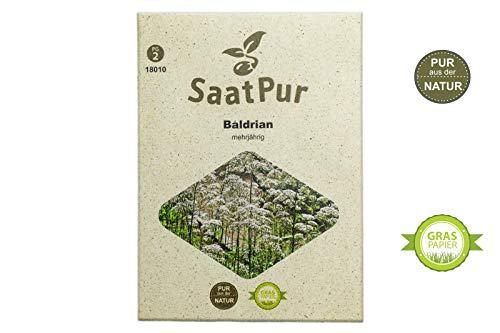 SaatPur Baldrian Samen, Saatgut für ca. 150 Pflanzen