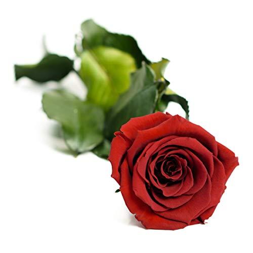 Carpe Diem Infinity Rosenbox   Echte Langstielige Rose (Bordeaux)   3 Jahre haltbar
