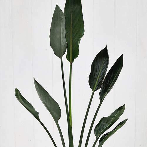 【日比谷花壇】観葉植物「レギネ・バスケット」