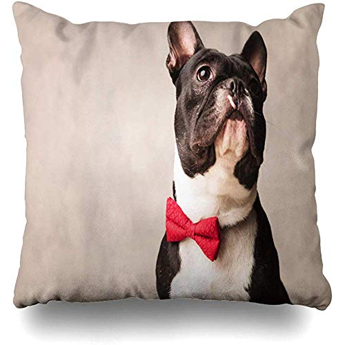 Throw Pillow Cover Square 18x18 Inch Bulldog Red Bowtie Cute Close Black White Gentleman French Dog Gray Frenchie Puppy Home Decor Cushion Pillow Case