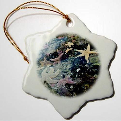 BYRON HOYLE Fotos-Boston-Aquarium-Ornamente, bunt, Seestern im Boston, Schneeflocken-Ornament, Pandemie, Weihnachtsdekoration, Hochzeitsdekoration, Urlaubsgeschenk