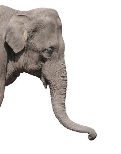 Apalis Fenstersticker Fensterfolie Elefant Fensterbilder HxB: 30 x 21cm