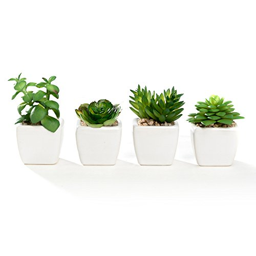 Nattol Small Artificial Succulent Plant Potted in White Ceramic Pots for Home Decor Set of 4
