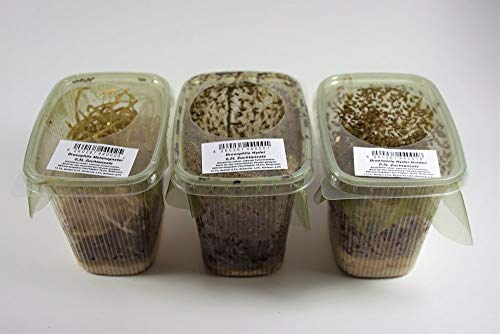 terra2go 3er Set - Drosophila Mix