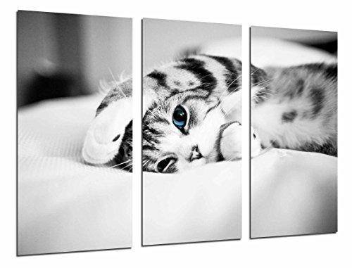 Poster Fotográfico Hipster Animal Gato Ojos Azules, Blanco y Negro Tamaño total: 97 x 62 cm XXL