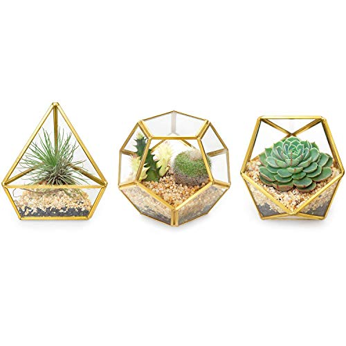 Mkouo 3 Packs Mini Glass Geometric Terrarium Container Modern Table Planter Windowsill Decor Floating Shelves DIY Display Box Centerpiece Xmas Gift for Succulent Air Plant Miniature Fairy Garden, Gold