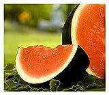 Sugar Baby Watermelon | Non-GMO | Fresh Garden Seeds (25)