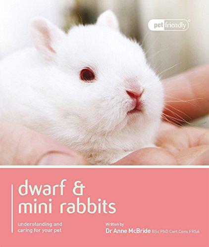 Dwarf & Mini Rabbits. (Pet Friendly)