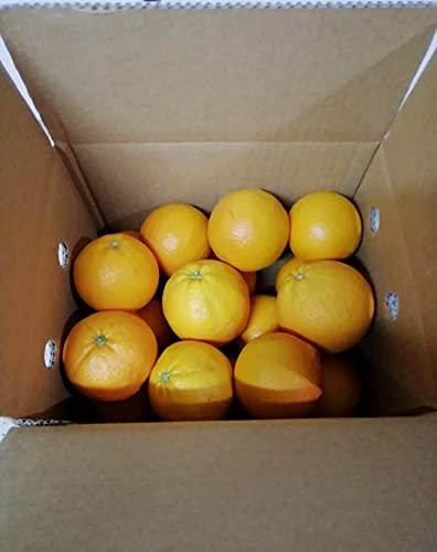 ARANCE CALABRESI - 4,5 KG - Sapore dolce - Non trattate e garantite buccia edibile - Giardino...