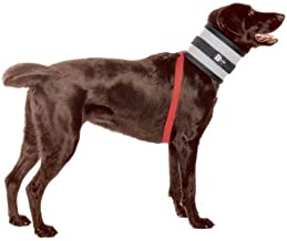 bite free collars for dogs