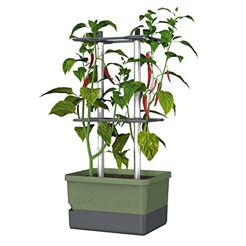 Charly Chili - Maceta para Chiles - Sistema de riego con depósito de agua de 4,5L - Soporte para plantas trepadoras - 10 litros de tierra - para chiles, pimientos, berenjenas (Verde oscuro)