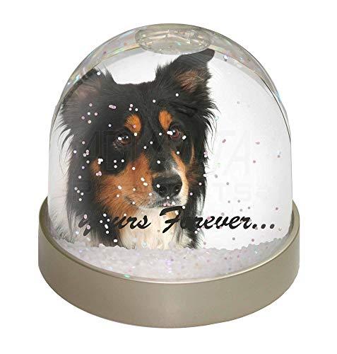 Advanta Tri-Color Border Collie Dog Yours Forever Schneekugel Kugel, Geschenk, Mehrfarbig, 9,2 x 9,2 x 8 cm