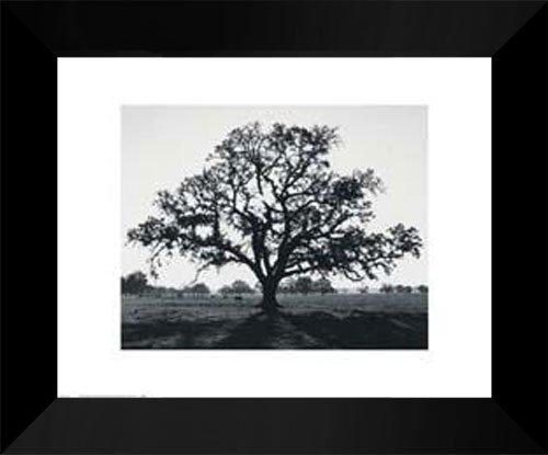Ansel Adams FRAMED Art Print 15x18  Oak Tree Sunrise