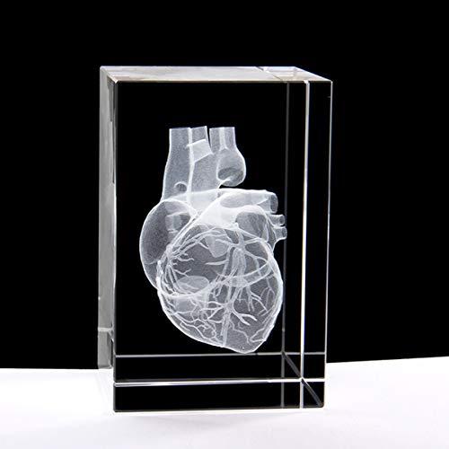 3D Human Heart Anatomical Paperweight