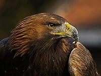 A50パズルジグアダルト1000ピース鳥動物70x50cm
