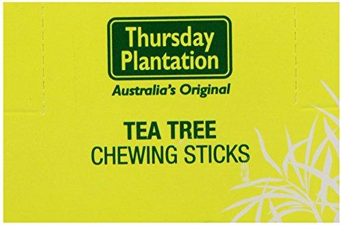 Nature's Plus 6 Tea Tree Toothpicks Original, 100 Count