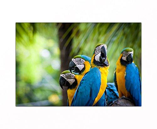 deinebilder24 Wand-Bilder auf Leinwand - 70 x 90 cm - Papagei Ara Vogel