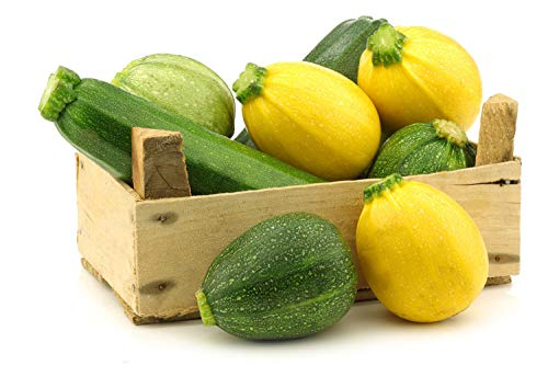 50pcs Mix Zucchini Seeds Annual Heirloom Vegetables Seed for Home Gardening Planting High Germination Rate Squash Variety Kitchen Gift