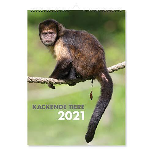 Kackende Tiere Kalender 2021 – Wandkalender Din A4, Lustige Geschenke für Männer