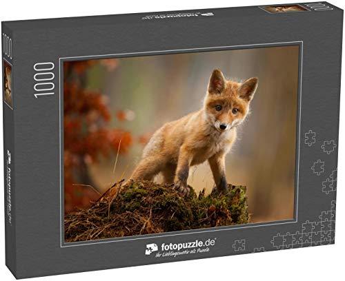 Puzzle 1000 Teile EIN junger Fuchs schoss in einem Wald - Klassische Puzzle mit edler Motiv-Schachtel, Fotopuzzle-Kollektion 'Tiere'