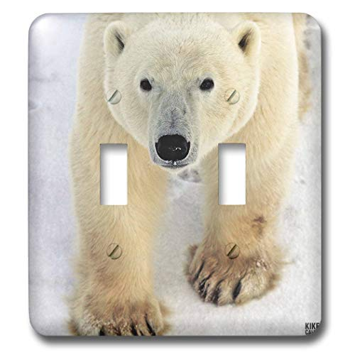 Polar Bear Close-Up Double Toggle Switch - 3dRose lsp_10719_2