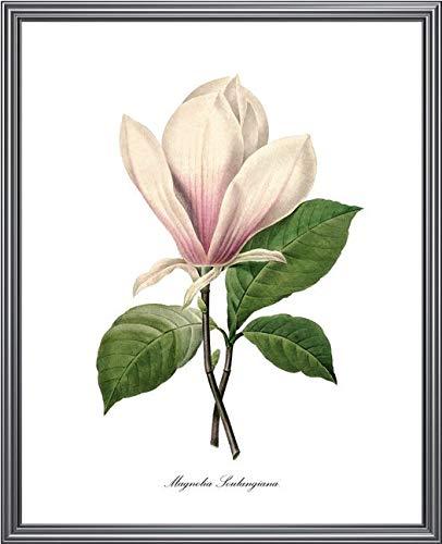 Pink Untertasse Magnolia Print Art...