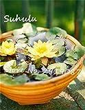 *5 Stück Mini-Samen New Pond Samen Wasser-Lilien-Samen besten Indoor Fissidens Bonsai Diy Garten s Germinate