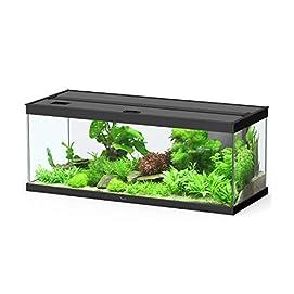 Dehner Aqua Premium Aquarium-Set ProLine 100 160 L