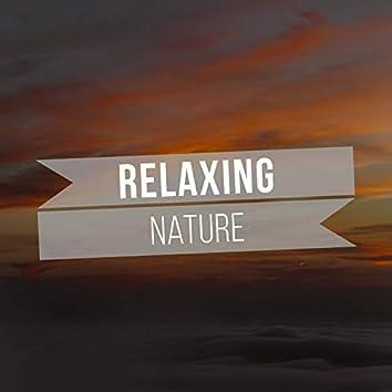 # 1 Album: Relaxing Nature