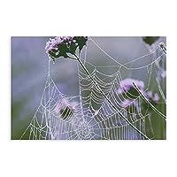 天然植物ポスタークモの巣と花キャンバスポスター壁アートの装飾家族の寝室の装飾のための絵画の印刷アンフレーム:20×30インチ(50×75cm)