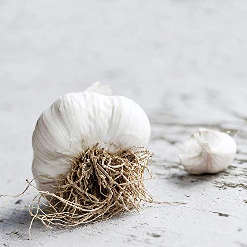 Private Garden Gardening Planting Attempt Produce Multi-Purpose Full Prolific Vegetables Crops ?4PCS White Garlic Bulbs GLTING