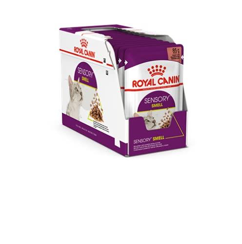 Royal Canin Comida húmeda Sensory Smell en salsa para gatos exigentes, 12 x 85 g