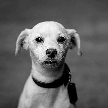 Simplista - Perros Calmantes