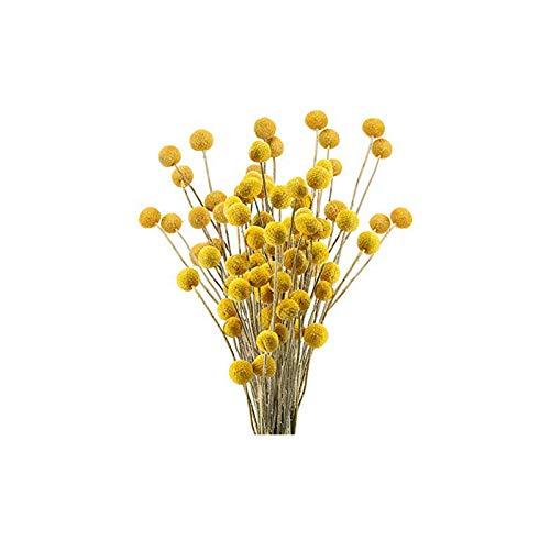 30pcs Natürlich Craspedia Trockenblumen Getrocknete Blumen Gelb Billy knöpft Kugeln Strauß Bündel, Craspedia Dried Flowers Billy Buttons Arrangements Dekorieren Sie für Heimwerker, Hochzeit, Geschäft