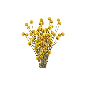 JHGH 30Pcs Dried Flowers Billy Button Balls Flowers Fake Silk Yellow Flower,Festival Celebration Front Door Wall Window Party Decoration Spring Summer Outdoor Ornaments