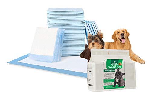 SANTER LABS Empapadores Entrenamiento Perros Mascotas Toallitas Alfombrilla higiénica SuperAbsorvente de 5 Capas Protector de Malos olores Tamaño Regular (58x56 cm) (Unidades, 40 Unidades)
