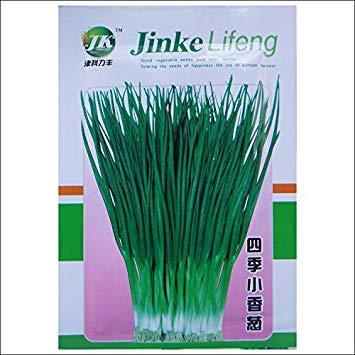 Vistaric 50 unids/pack Vegetal de alta calidad Four Seasons Shallot Seed Onion Semillas Aroma Jardín Decoración Bonsai semillas de flores