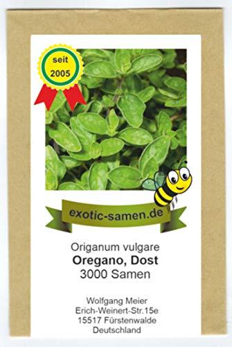 Oregano - Dost - Bienenweide - Oreganum vulgare - 3000 Samen
