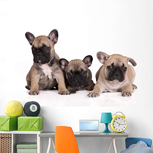 Wallmonkeys French Bulldog Puppies Wall Decal Peel and Stick Animal Graphics (72 in W x 48 in H) WM188145