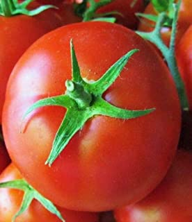 Red Monte Carlo Tomato 50+ Seeds #WZTY