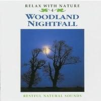 Woodland Nightfall