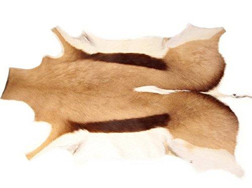 NaDeco Springbockfell Natur Groß 1A Qualität Antilopenfell Gazellenfell Tierfell Fellvorleger Fellteppich Dekofell