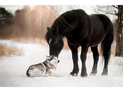 Oedim Fotomural Vinilo para Pared Perro y Caballo en la Nieve| 200 x 150 cm | Salones